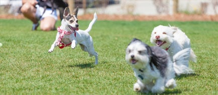 Dogs running and playing in the yard