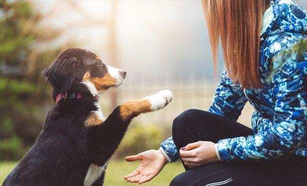 Teaching a dog to shake hands